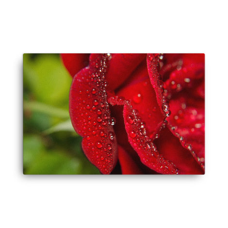 Bold and Beautiful Floor Floral Nature Canvas Wall Art Prints