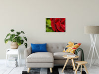 Floral Nature Photograph Bold and Beautiful - Fine Art Canvas - Home Decor Unframed Wall Art Prints