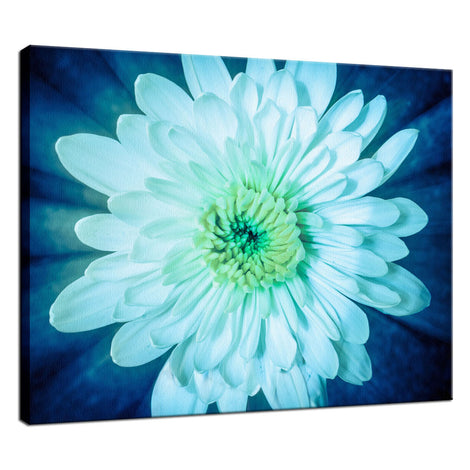 Brilliant Flower Nature / Floral Photo Fine Art Canvas Wall Art Prints