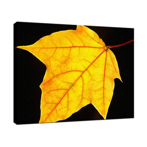 Brilliant Yellow Nature / Botanical Photo Fine Art Canvas Wall Art Prints