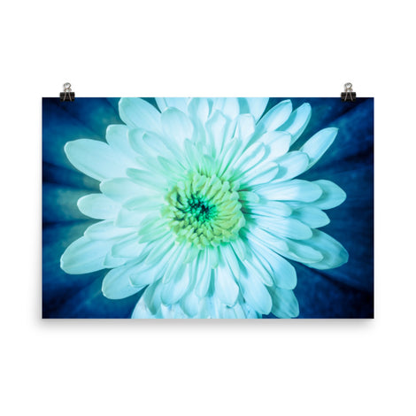 Brilliant Flower Floral Nature Photo Loose Unframed Wall Art Prints