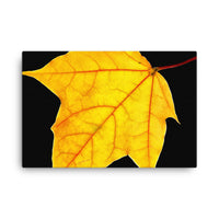 Brilliant Yellow Botanical Nature Canvas Wall Art Prints  - PIPAFINEART