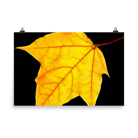 Brilliant Yellow Botanical Nature Photo Loose Unframed Wall Art Prints