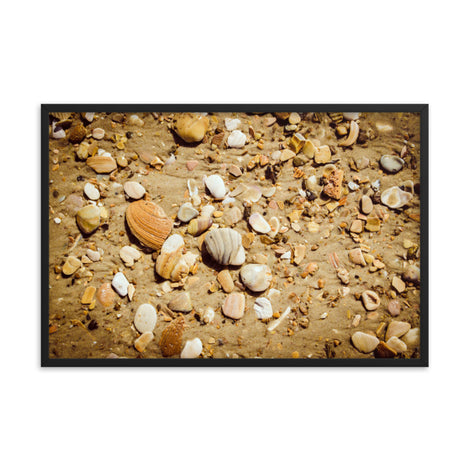 Broken Seashells and Sand Coastal Nature Photo Framed Wall Art Print