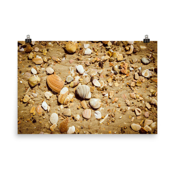 Broken Seashells and Sand Coastal Nature Photo Loose Unframed Wall Art Prints  - PIPAFINEART