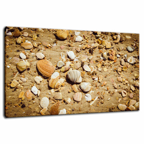Broken Seashells and Sand Coastal Nature Photo Fine Art Canvas Wall Art Prints