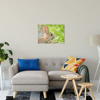 "Bunny at Bombay Hook Animal / Wildlife Photograph Fine Art Canvas & Unframed Wall Art Prints 20"" x 30"" / Canvas Fine Art - PIPAFINEART"