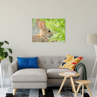 "Bunny at Bombay Hook Animal / Wildlife Photograph Fine Art Canvas & Unframed Wall Art Prints 24"" x 36"" / Canvas Fine Art - PIPAFINEART"