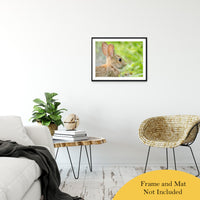 "Bunny at Bombay Hook Animal / Wildlife Photograph Fine Art Canvas & Unframed Wall Art Prints 20"" x 30"" / Classic Paper - Unframed - PIPAFINEART"