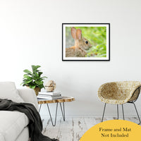"Bunny at Bombay Hook Animal / Wildlife Photograph Fine Art Canvas & Unframed Wall Art Prints 24"" x 36"" / Classic Paper - Unframed - PIPAFINEART"