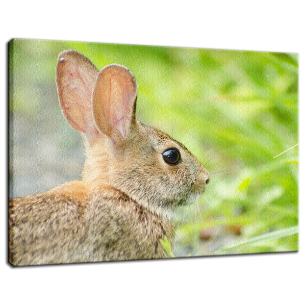 Bunny at Bombay Hook Animal / Wildlife Photograph Fine Art Canvas & Unframed Wall Art Prints - PIPAFINEART