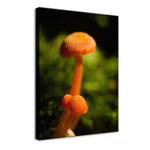 Button Top Mushrooms Nature / Botanical Photo Fine Art Canvas Wall Art Prints  - PIPAFINEART