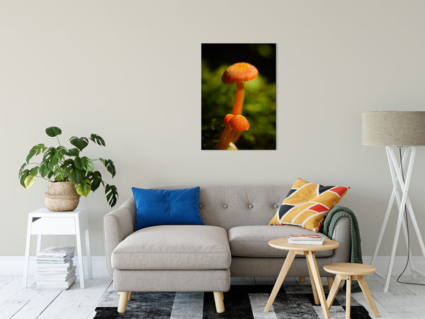 Nature Photography - Orange Button Top Mushrooms Against Natural Green Background - Fine Art Canvas - Home Decor Unframed Wall Art Prints