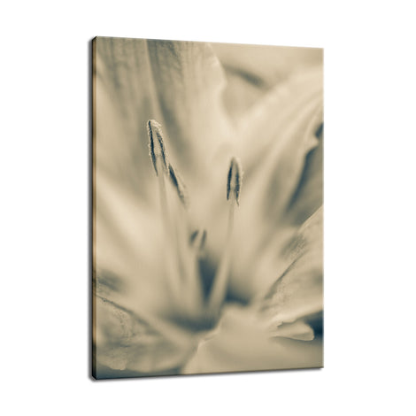 Calm Passions - Sepia Nature / Floral Photo Fine Art Canvas Wall Art Prints