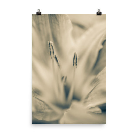 Calm Passions Floral Nature Photo Loose Unframed Wall Art Prints