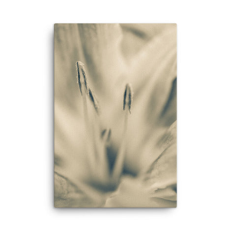 Calm Passions Sepia Floral Nature Canvas Wall Art Prints