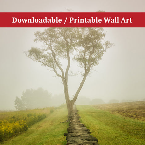 Calming Morning Landscape Photo DIY Wall Decor Instant Download Print - Printable