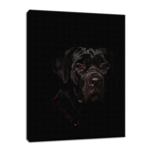Cane Corso Puppy Low Key Animal / Dog Photograph Fine Art Canvas & Unframed Wall Art Prints  - PIPAFINEART