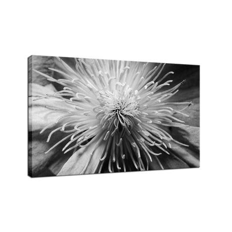 Center of Clematis - Black and White Nature / Floral Photo Fine Art Canvas Wall Art Prints