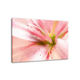 Center of the Stargazer Lily Nature / Floral Photo Fine Art Canvas Wall Art Prints  - PIPAFINEART