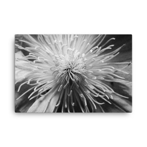 Center of Clematis Black and White Floral Nature Canvas Wall Art Prints