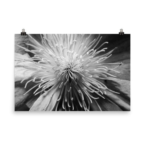 Center of Clematis Floral Nature Photo Loose Unframed Wall Art Prints