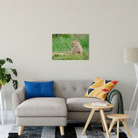 "Chillin Animal / Wildlife Photograph Fine Art Canvas & Unframed Wall Art Prints 20"" x 30"" / Canvas Fine Art - PIPAFINEART"