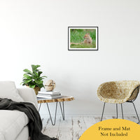 "Chillin Animal / Wildlife Photograph Fine Art Canvas & Unframed Wall Art Prints 16"" x 20"" / Classic Paper - Unframed - PIPAFINEART"
