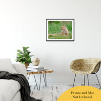 "Chillin Animal / Wildlife Photograph Fine Art Canvas & Unframed Wall Art Prints 20"" x 30"" / Classic Paper - Unframed - PIPAFINEART"