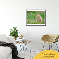 "Chillin Animal / Wildlife Photograph Fine Art Canvas & Unframed Wall Art Prints 24"" x 36"" / Classic Paper - Unframed - PIPAFINEART"