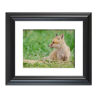 Chillin Animal / Wildlife Photograph Fine Art Canvas & Unframed Wall Art Prints  - PIPAFINEART
