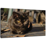 Chocolate the Stray Kitten Animal / Wildlife - Cat Photograph Fine Art Canvas & Unframed Wall Art Prints  - PIPAFINEART