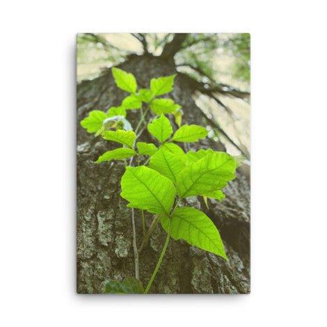 Climbing The Tree Botanical Nature Canvas Wall Art Prints