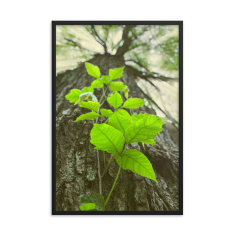 Climbing The Tree Botanical Nature Photo Framed Wall Art Print