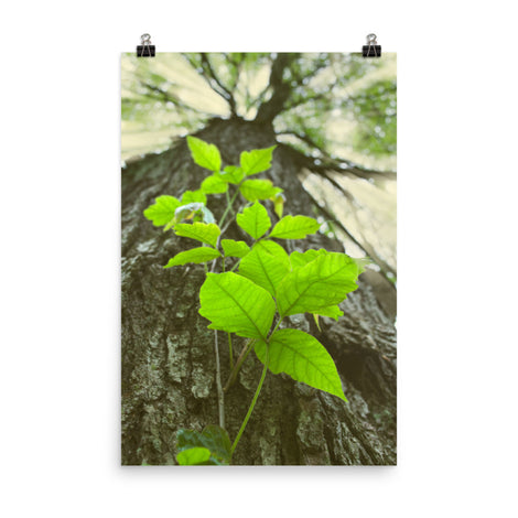 Climbing The Tree Botanical Nature Photo Loose Unframed Wall Art Prints