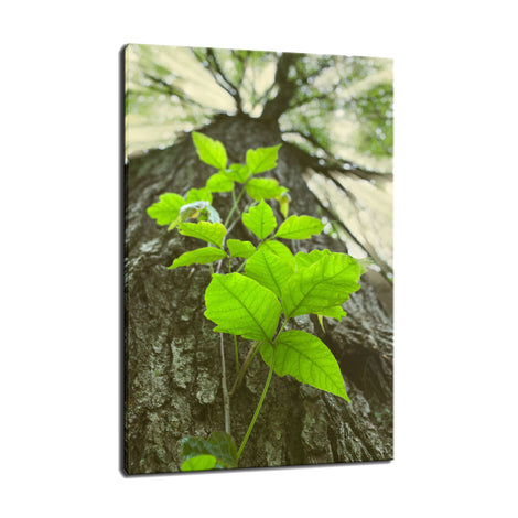 Climbing the Tree Botanical / Nature Photo Fine Art Canvas Wall Art Prints