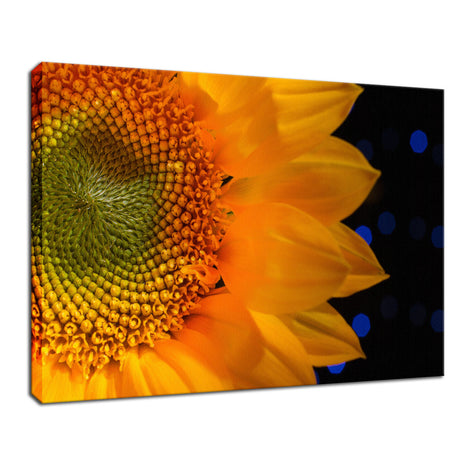 Close-up Sunflower Nature / Floral Photo Fine Art Canvas Wall Art Prints