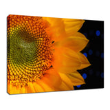 Close-up Sunflower Nature / Floral Photo Fine Art Canvas Wall Art Prints  - PIPAFINEART
