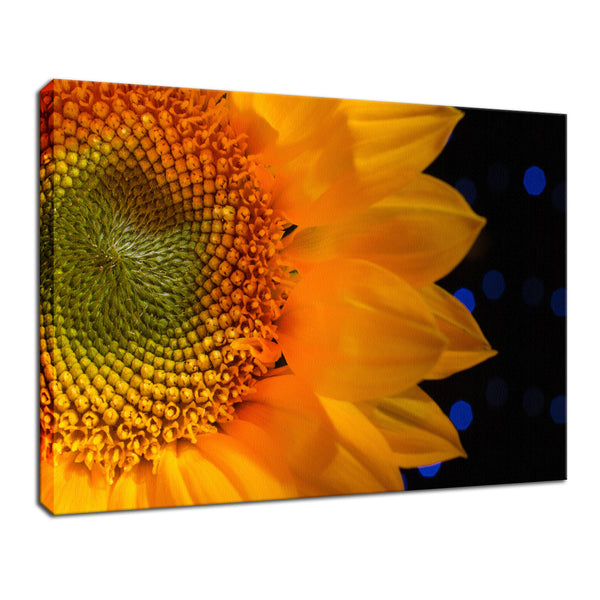 Close-up Sunflower Nature / Floral Photo Fine Art & Unframed Wall Art Prints - PIPAFINEART