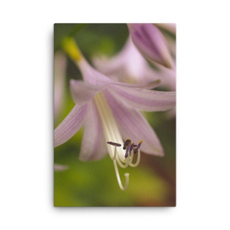 Close-up Hosta Bloom Floral Nature Canvas Wall Art Prints