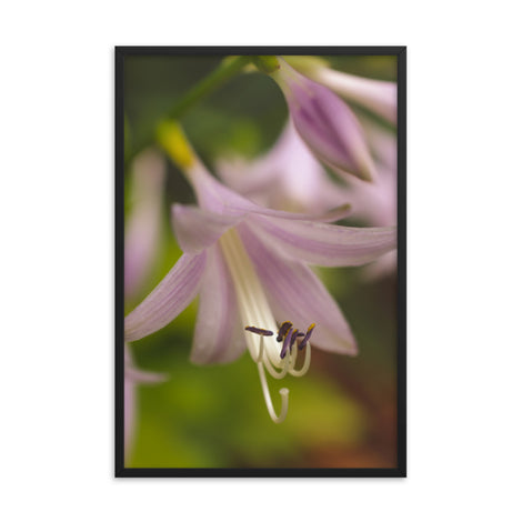 Close-up Hosta Bloom Floral Nature Photo Framed Wall Art Print