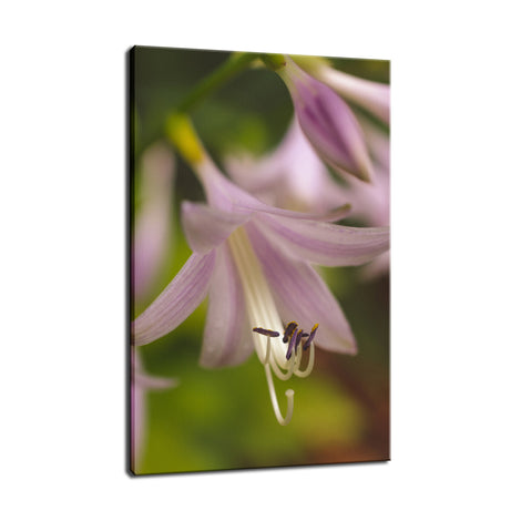 Close-up Hosta Bloom Nature / Floral Photo Fine Art Canvas Wall Art Prints