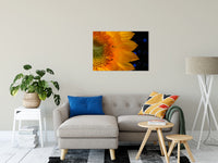 "Close-up Sunflower Nature / Floral Photo Fine Art Canvas Wall Art Prints 24"" x 36"" / Fine Art Canvas - PIPAFINEART"