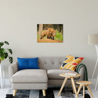 "Close to You Animal / Wildlife Photograph Fine Art Canvas & Unframed Wall Art Prints 20"" x 30"" / Canvas Fine Art - PIPAFINEART"