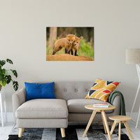 "Close to You Animal / Wildlife Photograph Fine Art Canvas & Unframed Wall Art Prints 24"" x 36"" / Canvas Fine Art - PIPAFINEART"