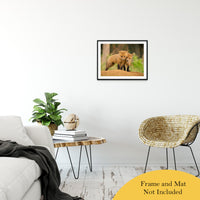 "Close to You Animal / Wildlife Photograph Fine Art Canvas & Unframed Wall Art Prints 20"" x 24"" / Classic Paper - Unframed - PIPAFINEART"