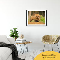 "Close to You Animal / Wildlife Photograph Fine Art Canvas & Unframed Wall Art Prints 24"" x 36"" / Classic Paper - Unframed - PIPAFINEART"
