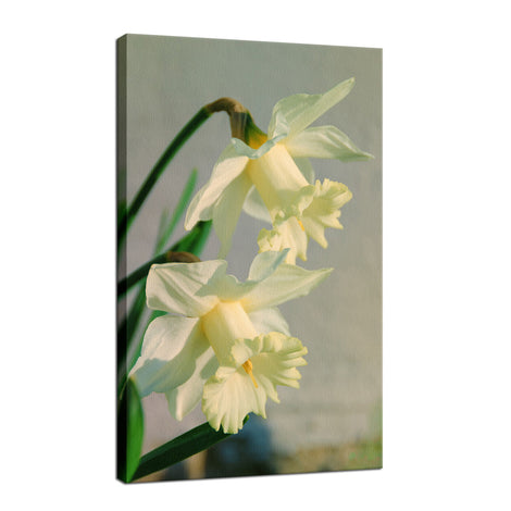 Colorized Daffodils Nature / Floral Photo Fine Art Canvas Wall Art Prints