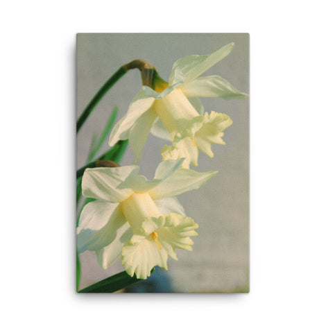 Colorized Daffodils Floral Nature Canvas Wall Art Prints