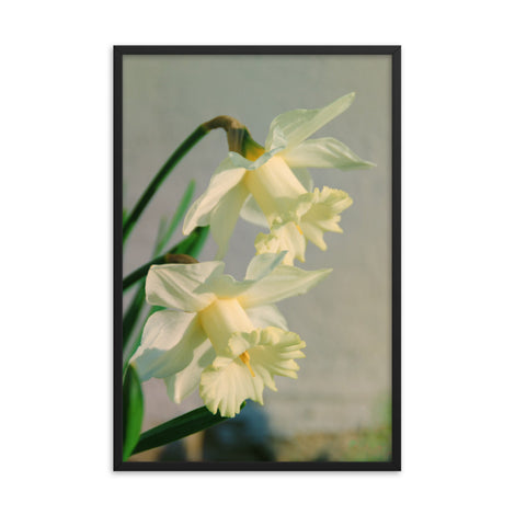 Colorized Daffodils Floral Nature Photo Framed Wall Art Print